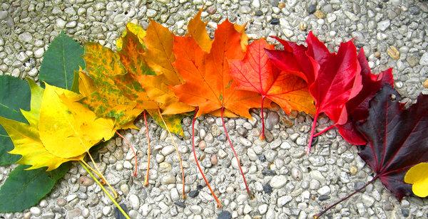 rainbow_of_autumn_by_lani_heartcore